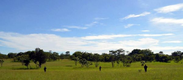 A LOOK BEHIND THE HEADLINES: ELEPHANT POACHING IN MALAWI