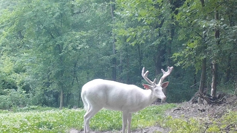 Trail Cams Capture Real Wild Life Photos