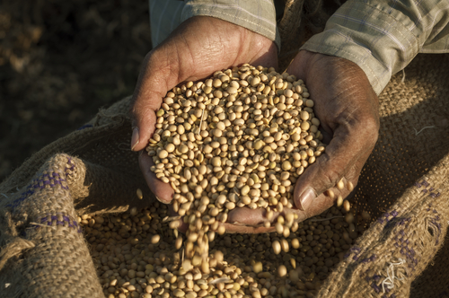 New Sharing Website Saves Seeds by Linking Farmers