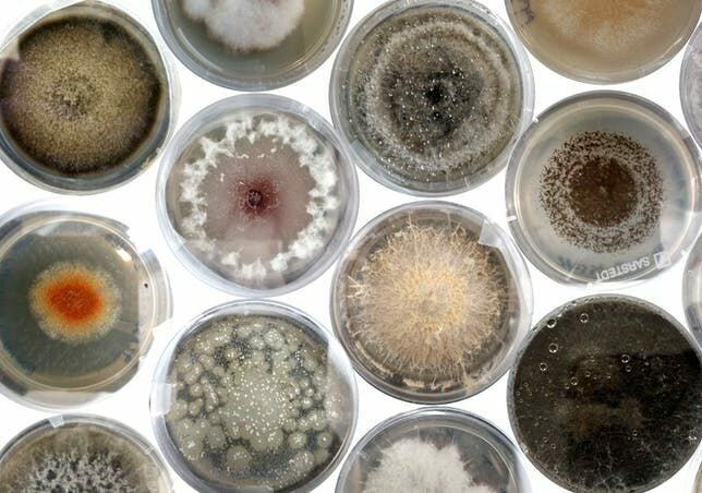 Seed banks are full of hidden fungi, and scientists love it